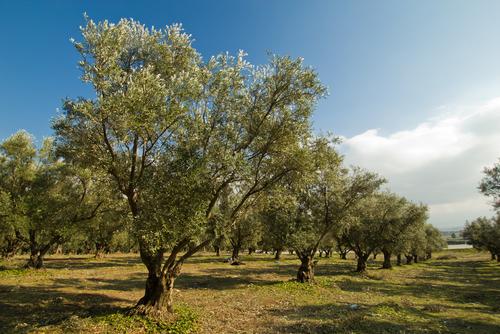 El Campus de Palencia acoge la V Semana Forestal de la ETSIIAA